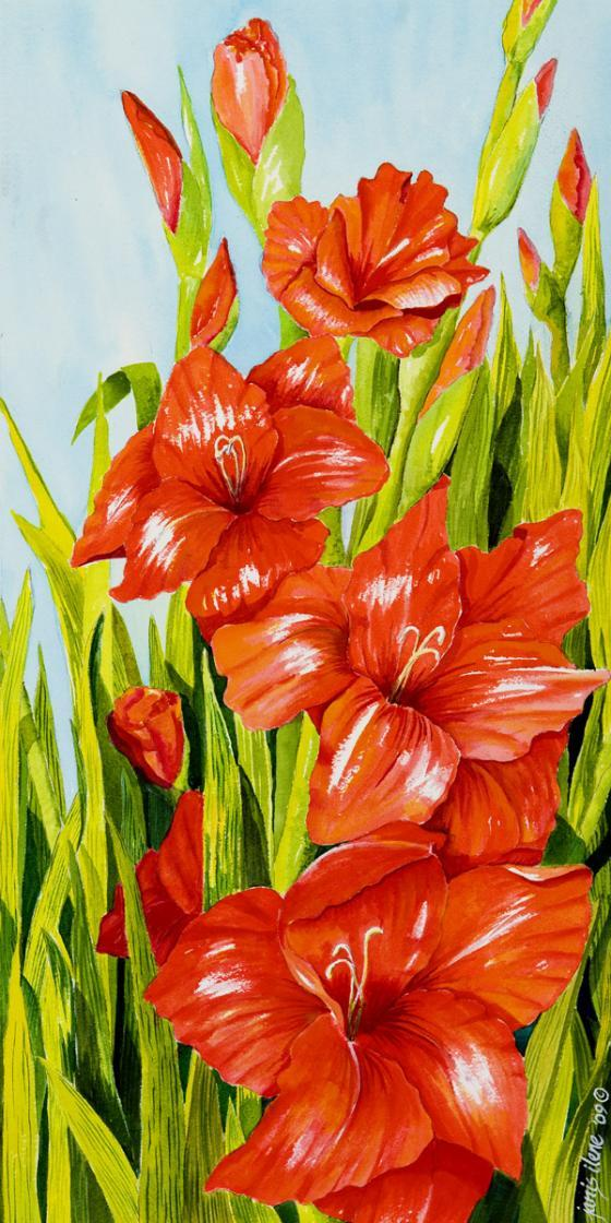 Like soldiers at attention , these colorful gladioli attract the eye.