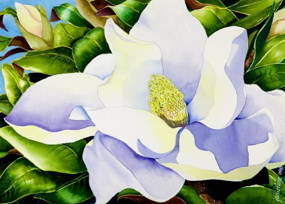 Magnolia...summer's most fragrant blossom.