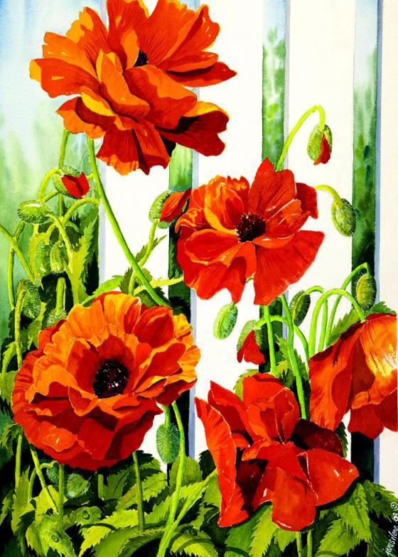 Bright orange paper-like petals of these poppies open in the summer light.