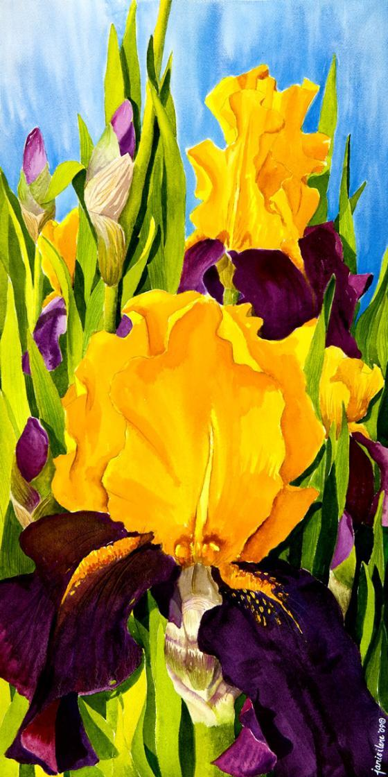 Majestic summer irises unfurl their royal colors.