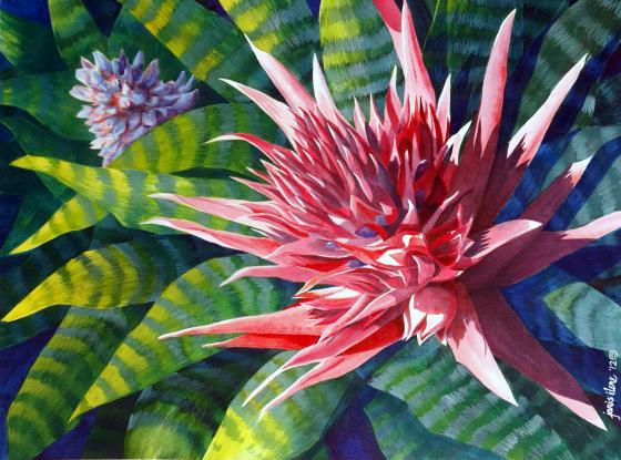Pink bromeliad in sunlight.